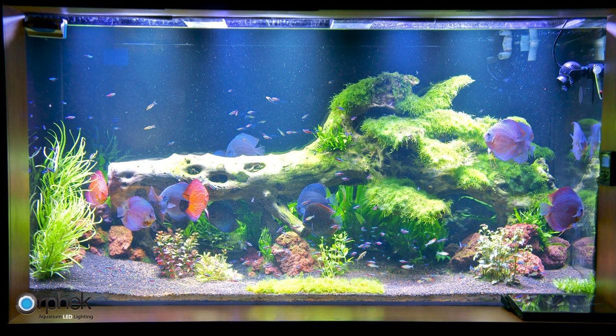 geplant zoetwater aquarium verlichting aquarium led. Black Bedroom Furniture Sets. Home Design Ideas