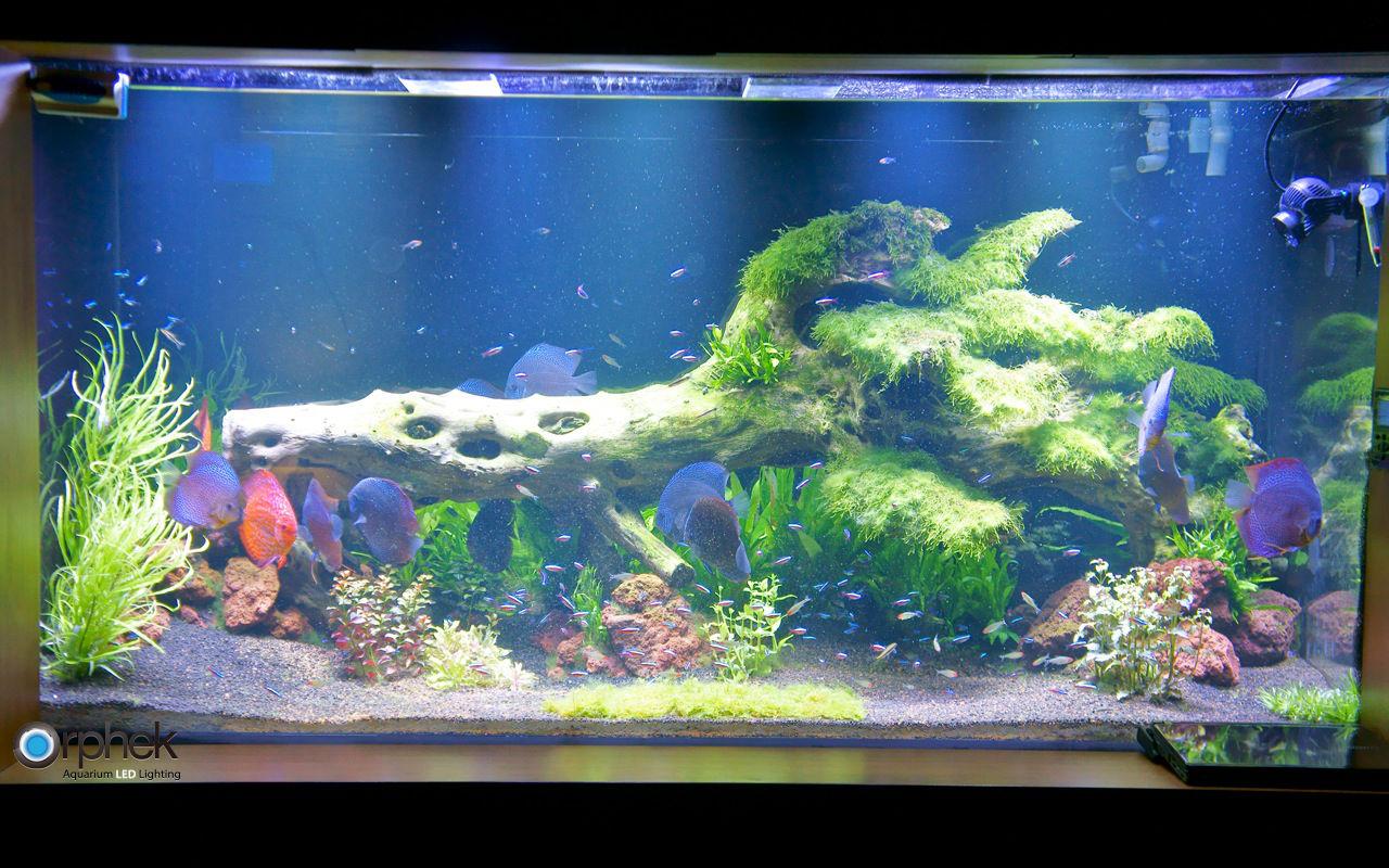 Eclairage d 39 aquarium d 39 eau douce plant orphek - Plantes d aquarium eau douce ...