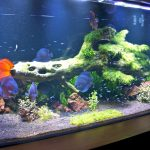 orphek-pr72-planted-freshwater-aquarium-lighting