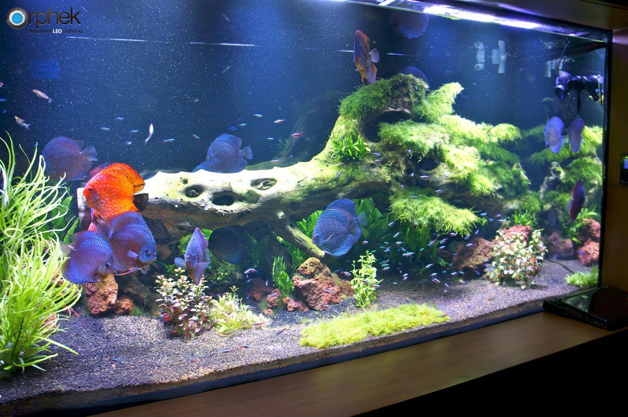 gepflanzte s wasseraquarium beleuchtung aquarium led beleuchtung orphek. Black Bedroom Furniture Sets. Home Design Ideas
