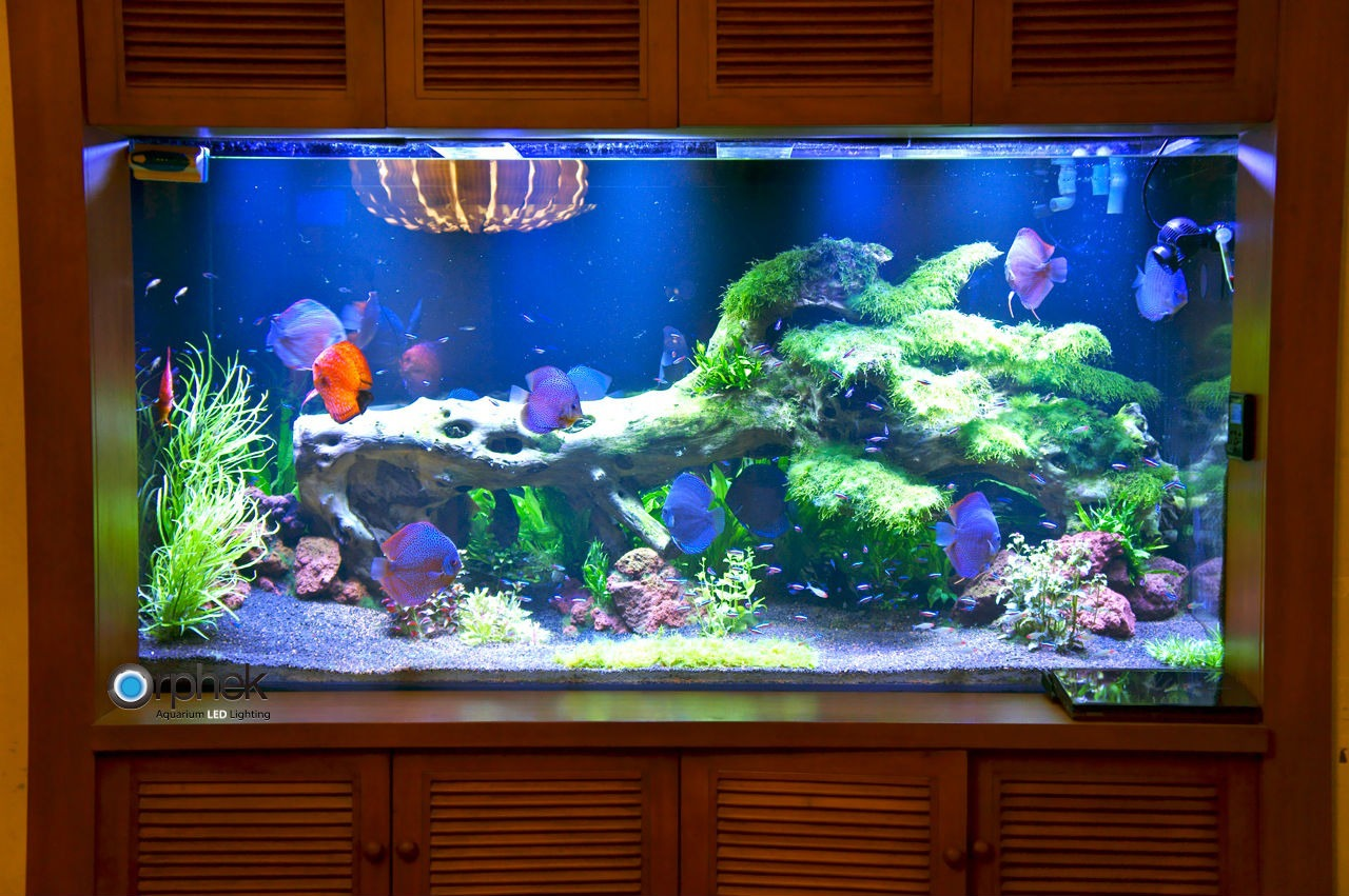 gepflanzte s wasseraquarium beleuchtung aquarium led beleuchtung orphek. Black Bedroom Furniture Sets. Home Design Ideas