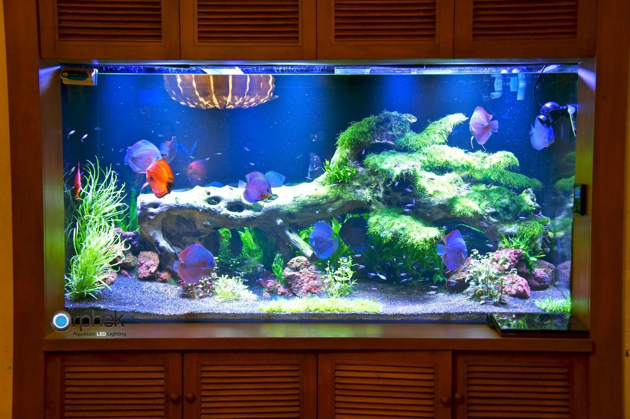 Illuminazione per acquari d acqua dolce con impianto
