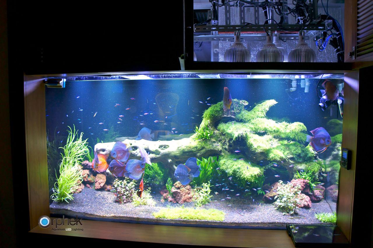 Как сделать аквариум сделать похожем на морской