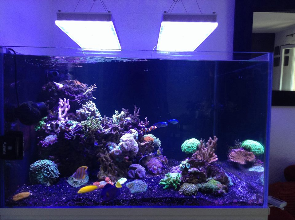 LED-aquarium-éclairage