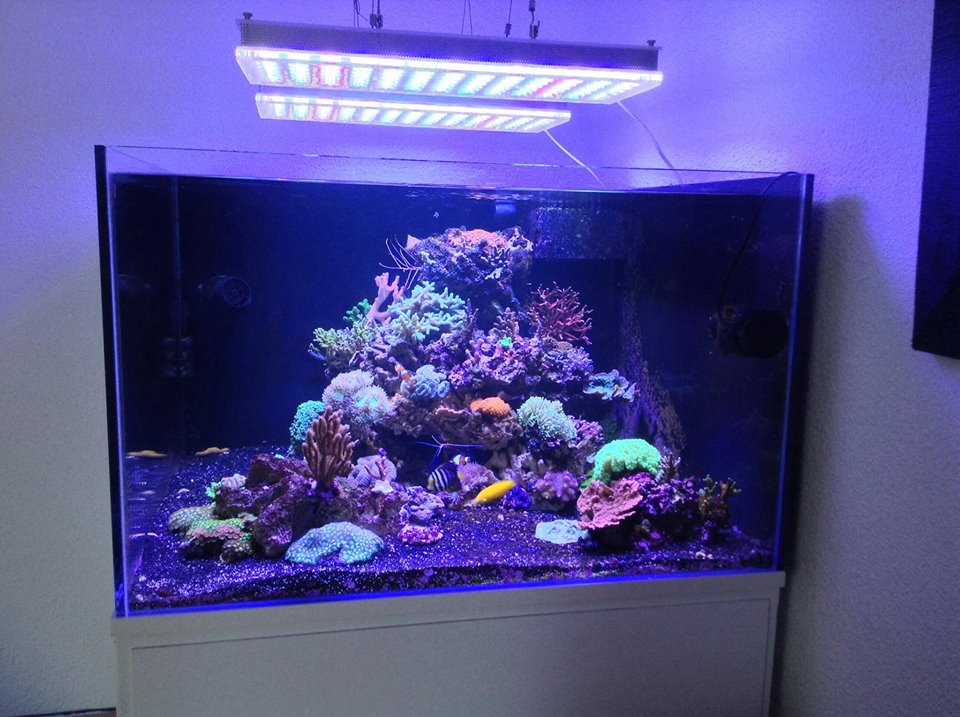 Led-acquario-lights