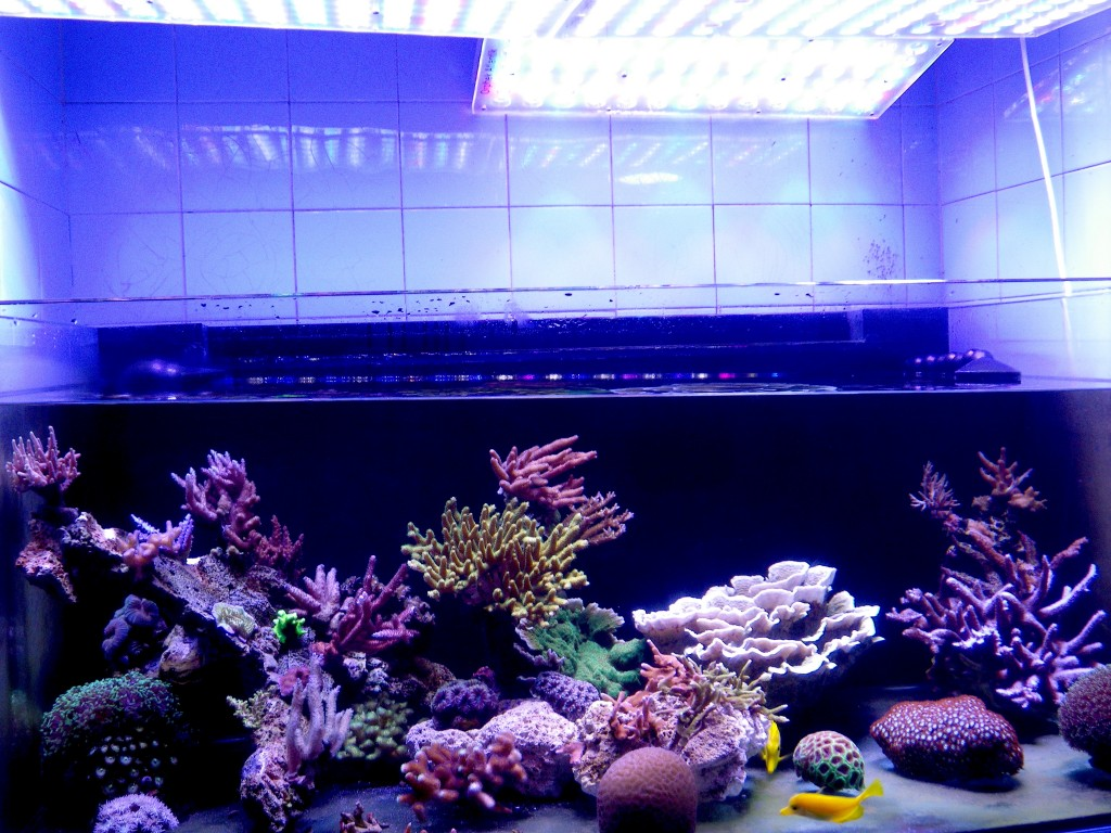 acclimating-votre-aquarium à éclairage LED