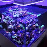 randloze-aquarium-with-led-verlichting