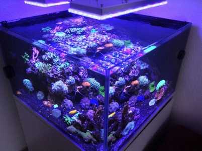 rimless-aquarium-with-led-lighting