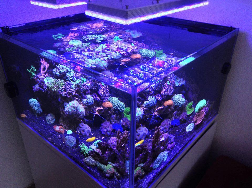 aquarium led beleuchtung fotos reef und bepflanztes aquarium galerie orphek. Black Bedroom Furniture Sets. Home Design Ideas