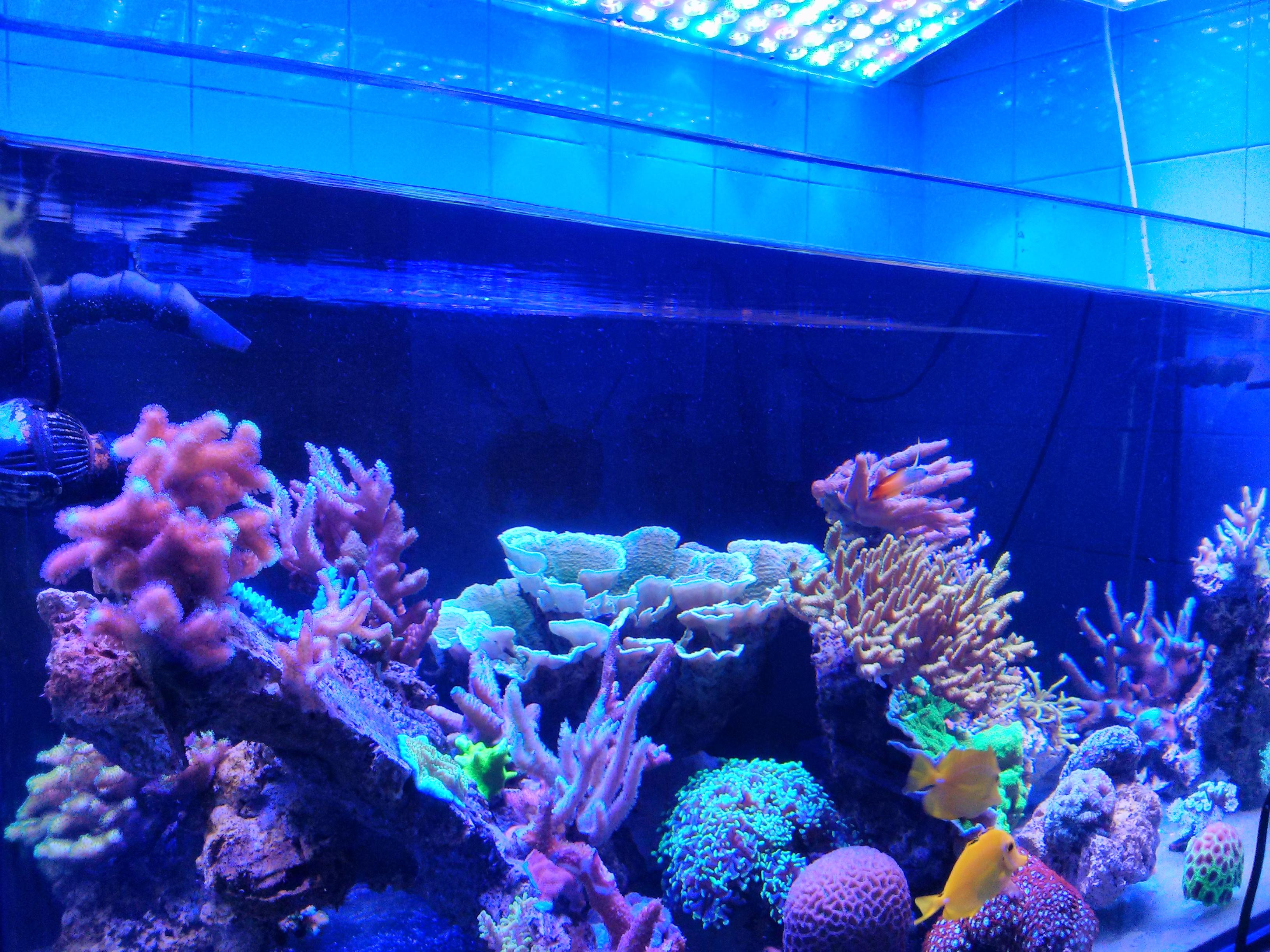 Par acquario di illuminazione a led orphek dell 39 acquario for Acquario a colonna
