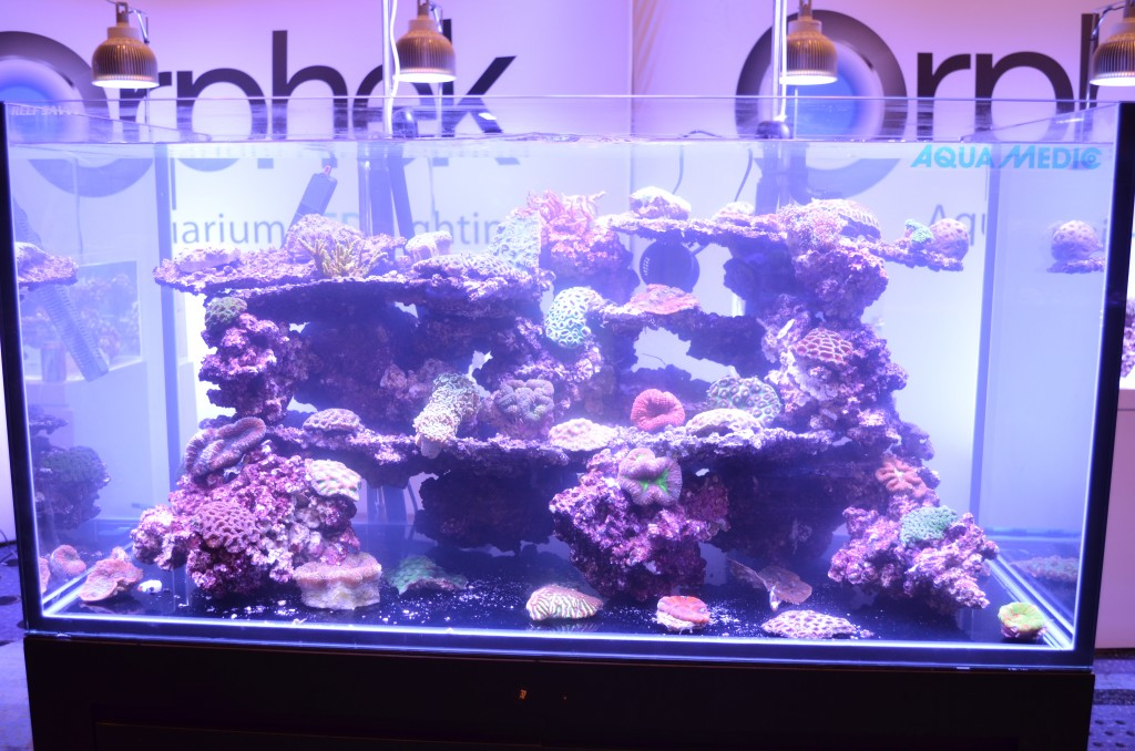 récif aquarium LEDlighting-Orphek
