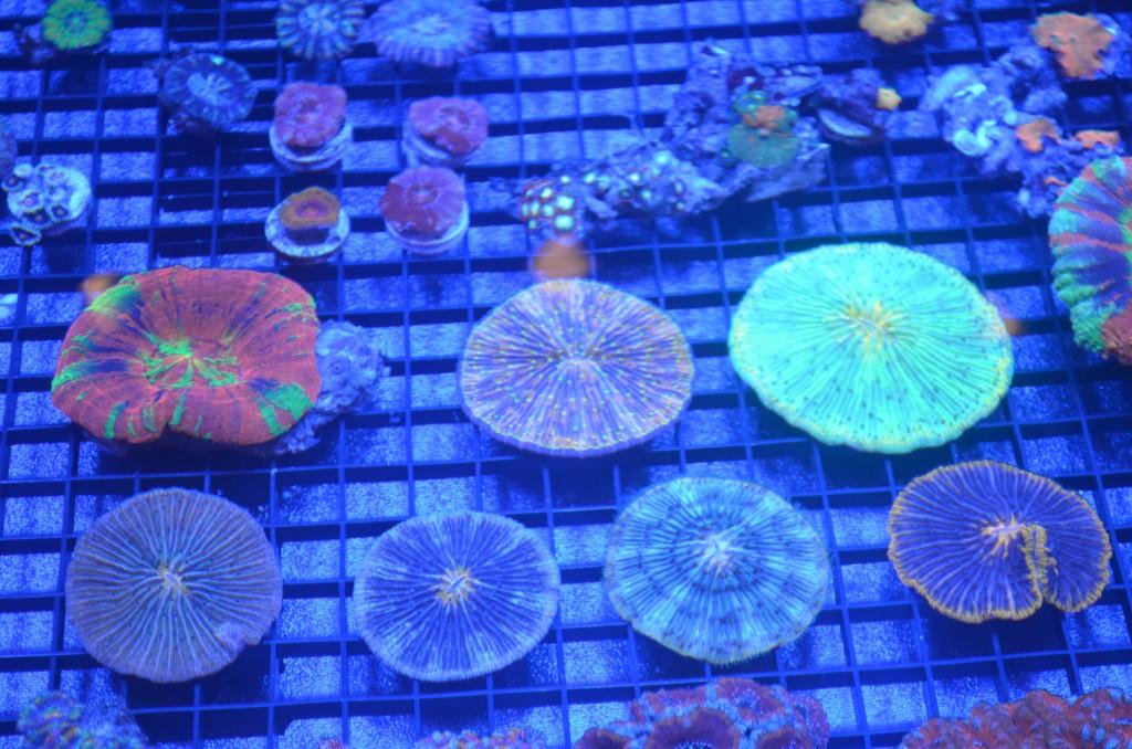 Frag-кораллы