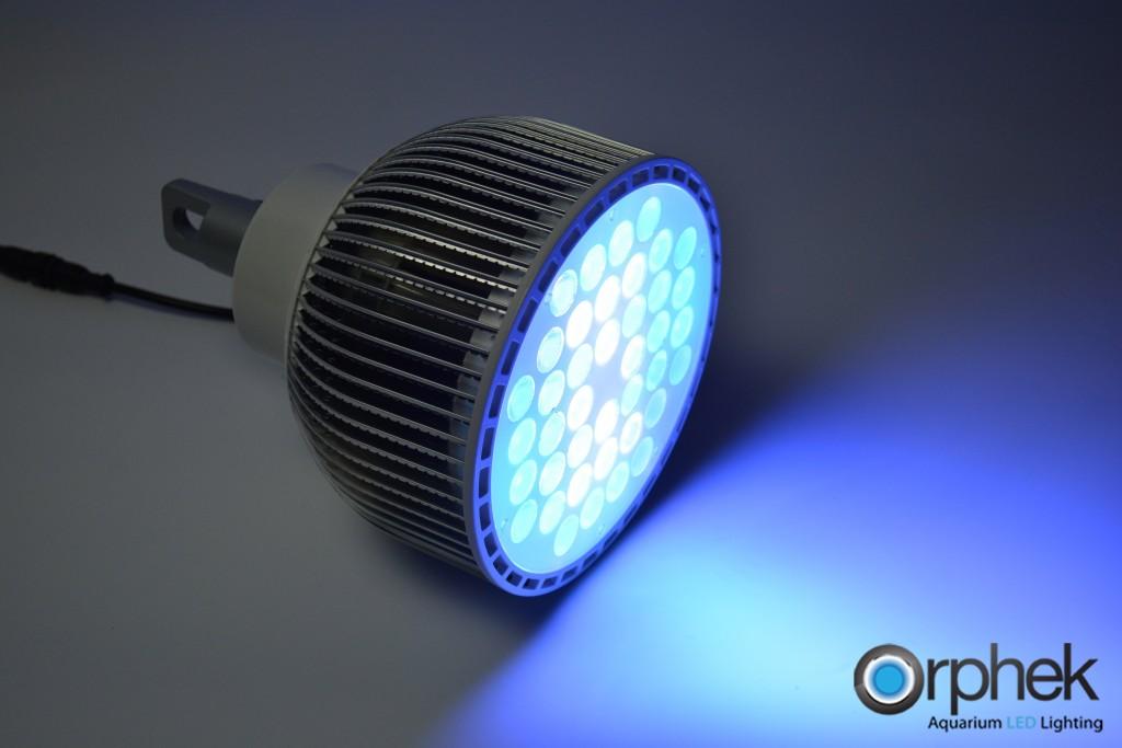 led light koralowa