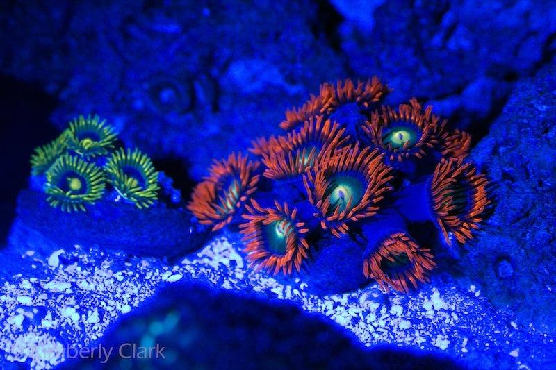 fluorescent coral picture