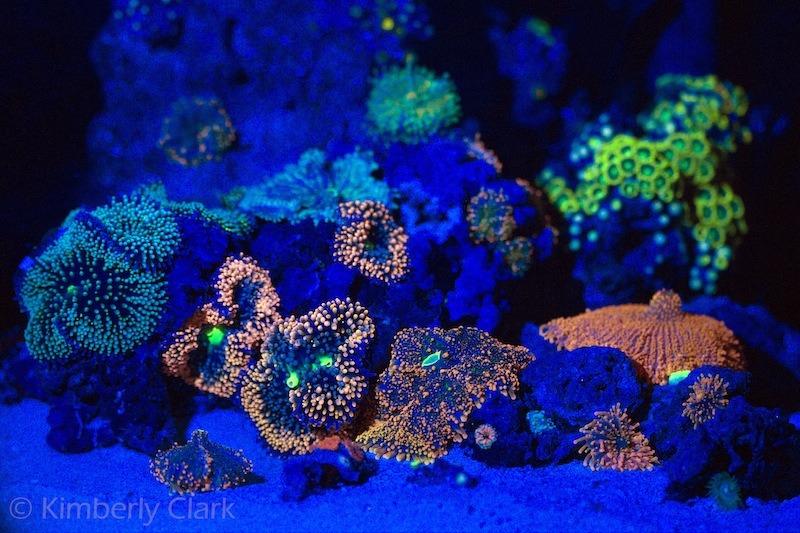 image de corail fluorescent