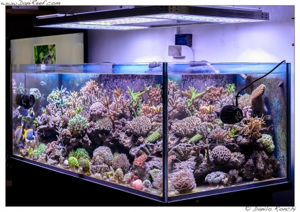 LED-Aquarium-lighting-orphek