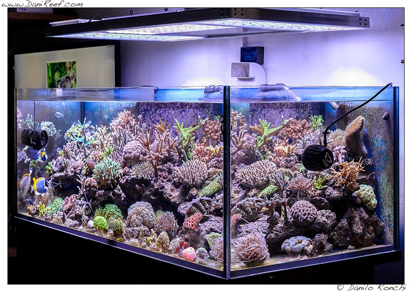 LED-Aquarium-éclairage orphek
