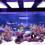 LED-aquarium