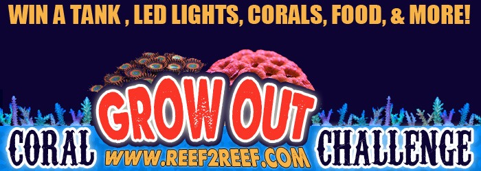 REEF2REEF-WIN Tank LED-valaistus-Korallit-Food
