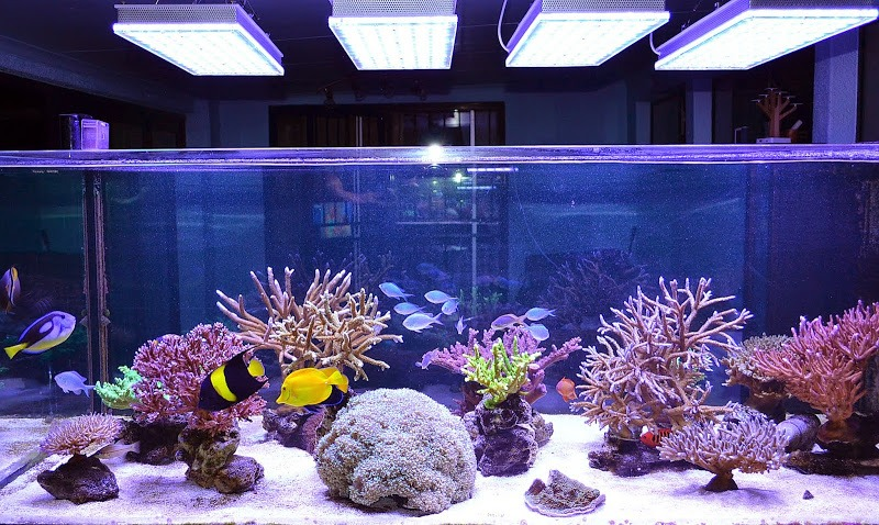 led-aquarium-reef-orphek-led-atlantik