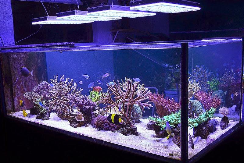 orphek aquarium led lighting Gallery Marine Reef Aquarium Photos