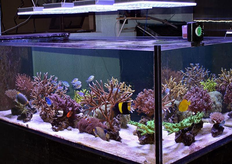 mein panzer wiedergeboren aquarium led beleuchtung orphek. Black Bedroom Furniture Sets. Home Design Ideas