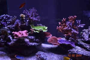 12-02-2014 UK reef aquarium 9 monthes