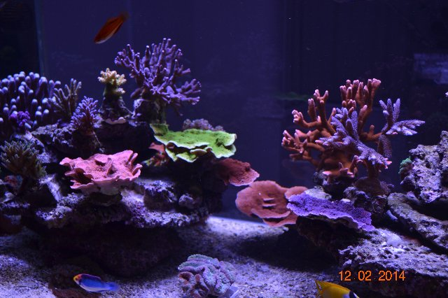 12-02-2014 UK Reef Aquarium monthes 9
