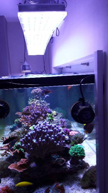 13-02-14 reef aquarium LED aquarium LED