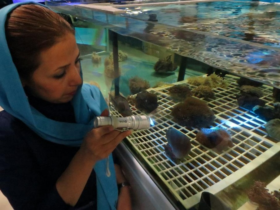 azurelite-used-at-iran-aquarium-to-inspect-corals