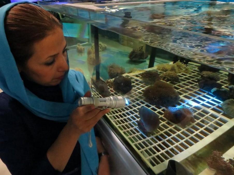 azurelite usados-at-Irã-aquário-to-inspecionar-corais