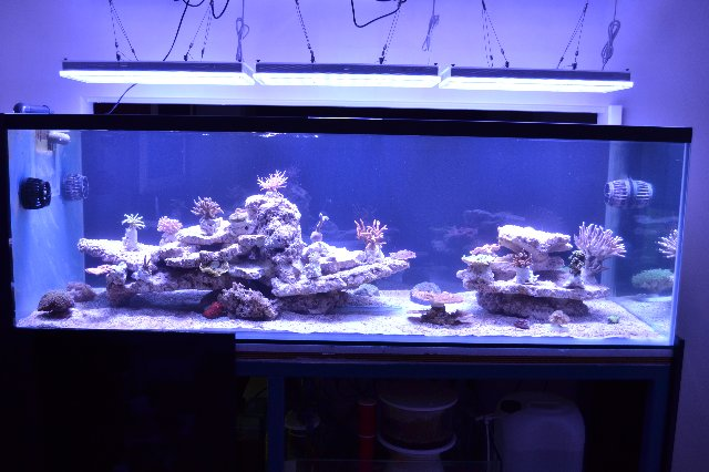 Reef Aquarium LED belysning Uk 11-05-13