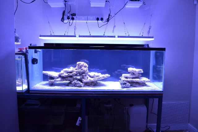 UK client reef tank shows amazing development