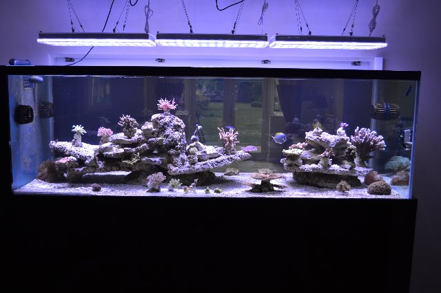 Uk reef aquarium 29-06-13