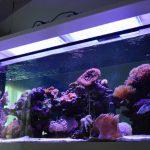 atlantik-client-in-dubai-shares-photos