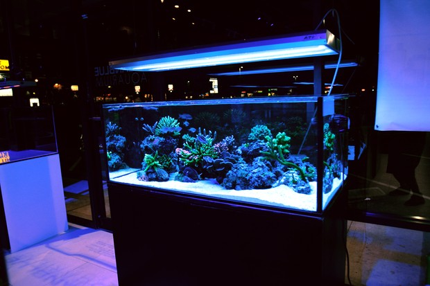100G Reef Savvy randlose Aquarium