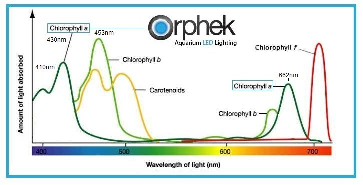 Chlorophyll-a-and-b-spectrum-corals