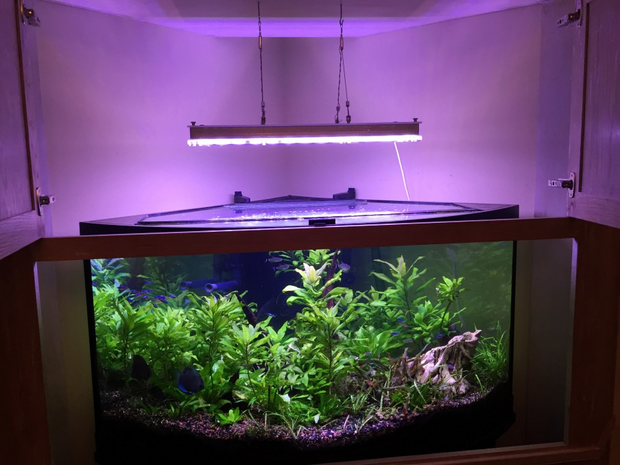 Can Orphek do Planted Discus led fixture
