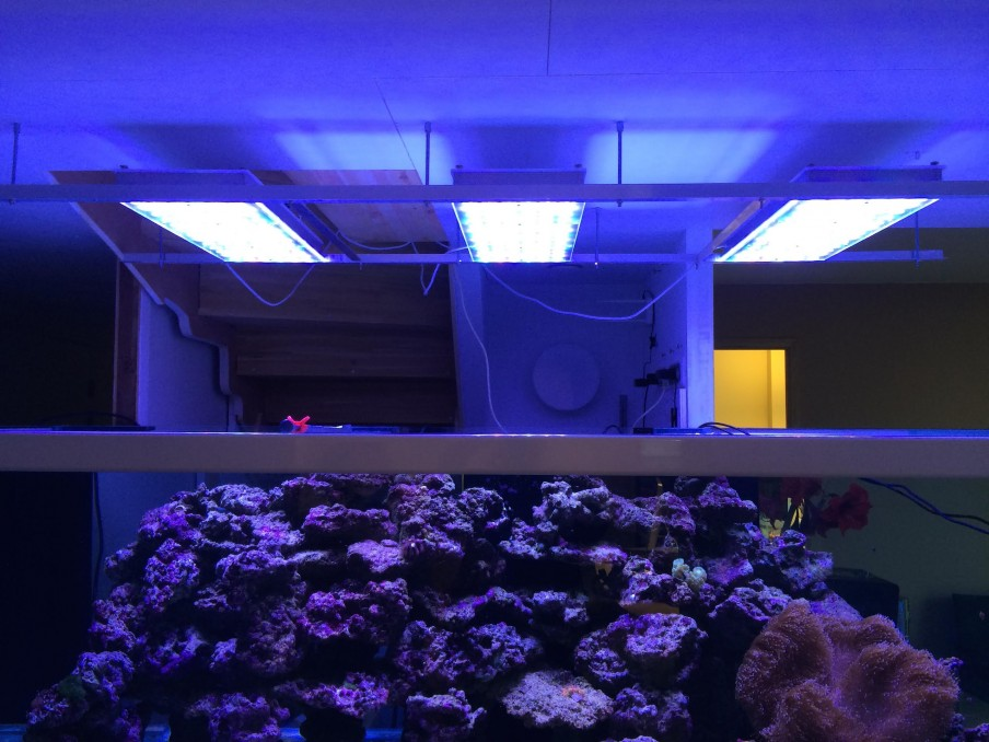 ISI-FISH-Led-akvarium-light-orphek