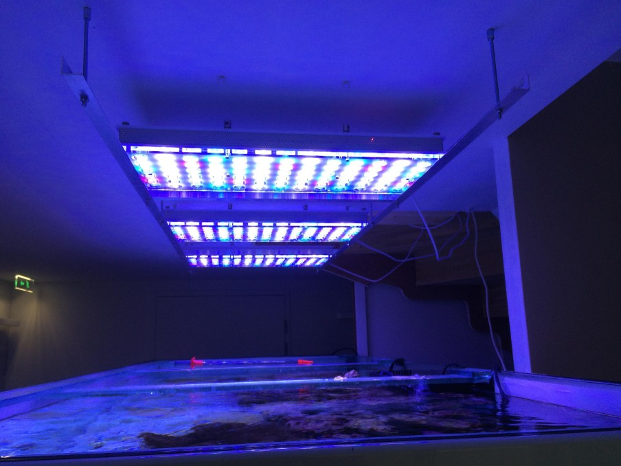 ISI-FISH-Led-aquarium-light-orphek