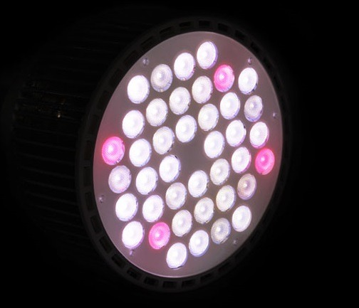 Trồng-Aquarium-LED-Light-Atlantik-Pendant-