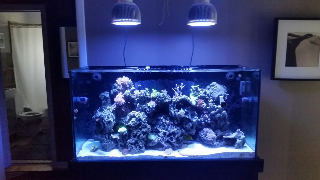 after Aquarium Led lighting