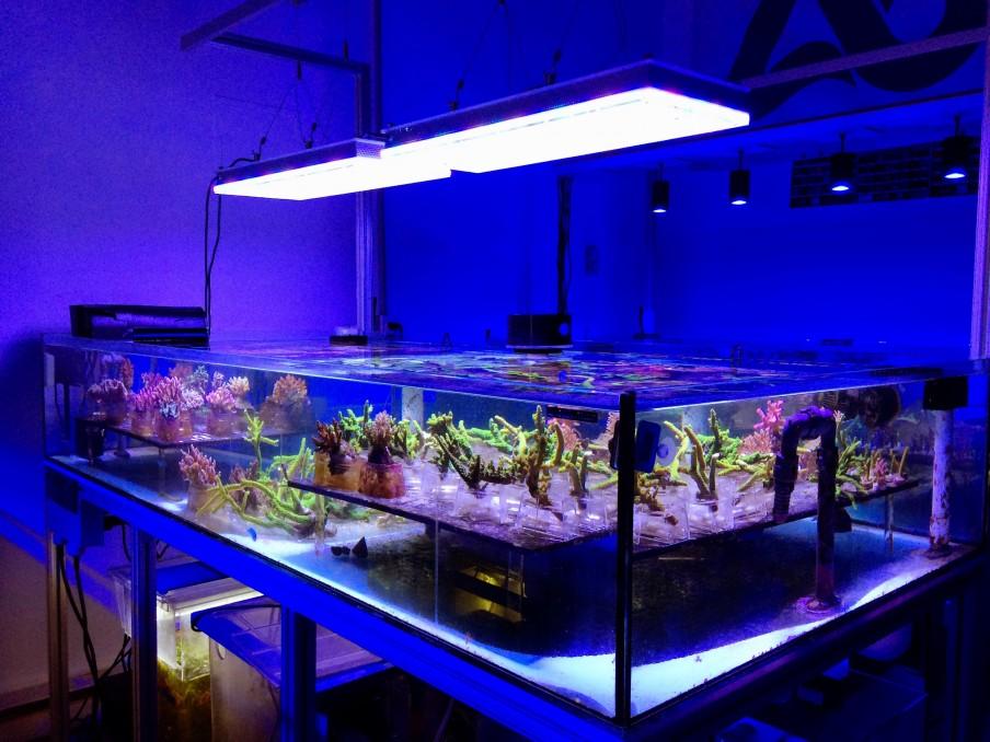 aquamedicusalive schlie t sich der orphek familie an aquarium led beleuchtung orphek. Black Bedroom Furniture Sets. Home Design Ideas