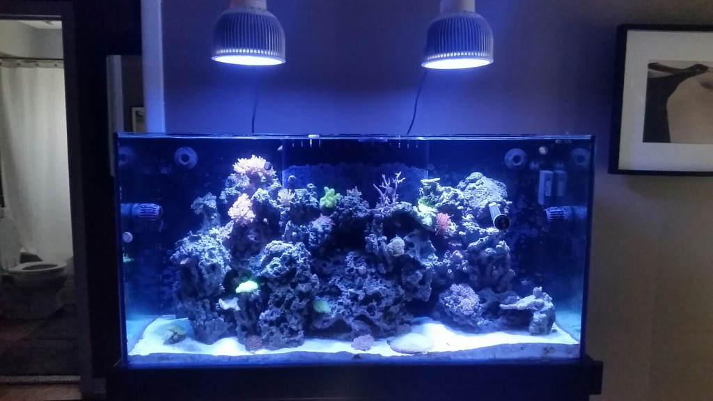 before reef aquarium led
