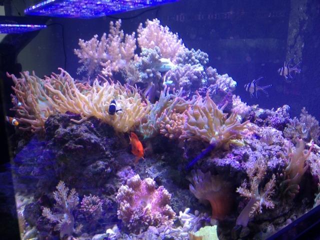 Коралловый магазин