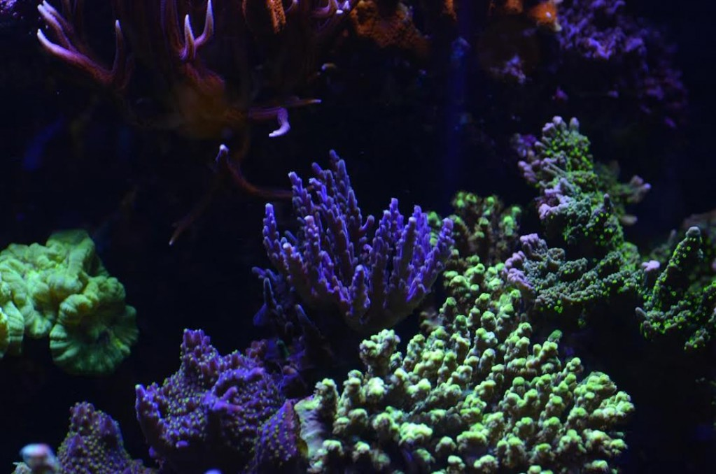uk-customer-shares-a-dream-come-true-reef