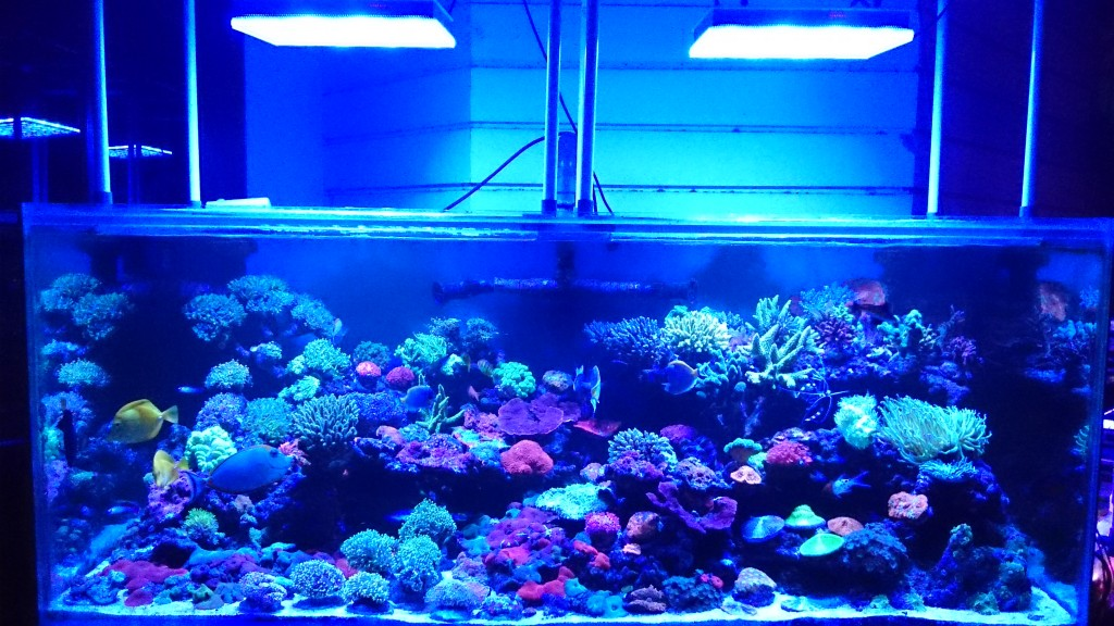 200 gallon reef tank display