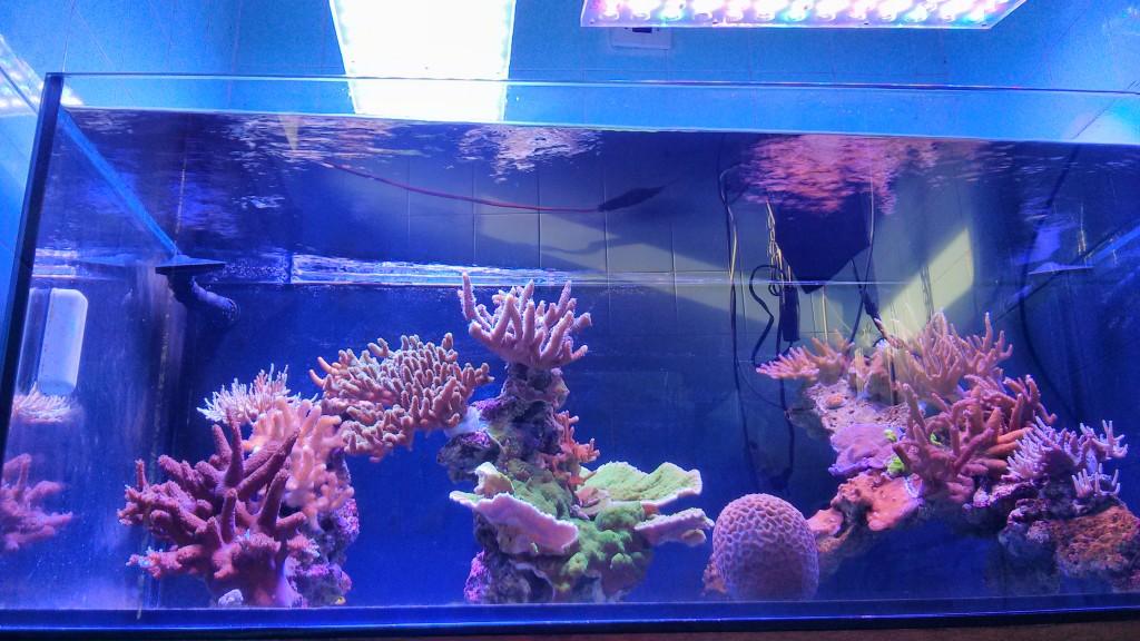 Passaggi 10 ad un acquario pi pulito orphek for Comprare un acquario
