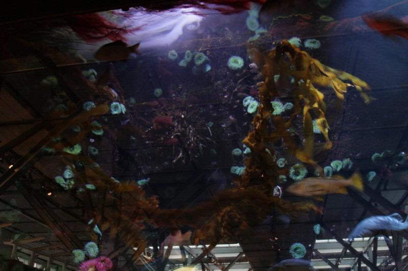 モントレーベイ水族館