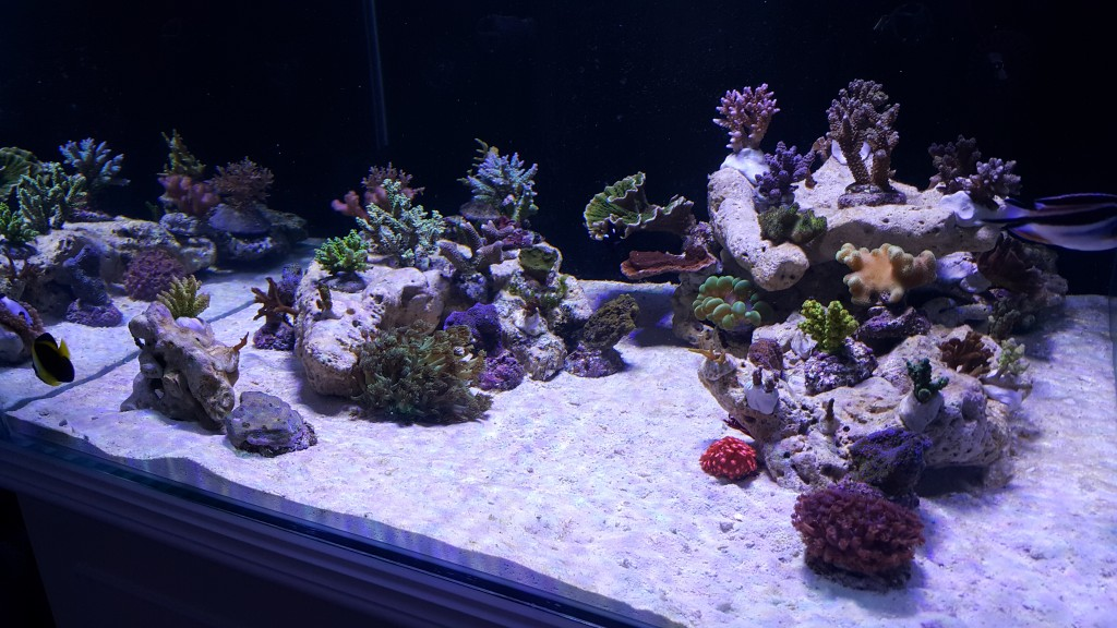 Reef-aquarium-with-orphek-Leds